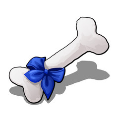 bone is made of cotton tied with blue ribbon with vector image