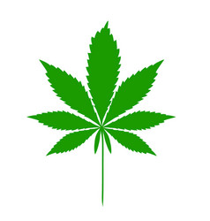 cannabis leaf dark green icon on white vector image