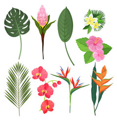 tropical flowers exotic herbal bouquets vector image