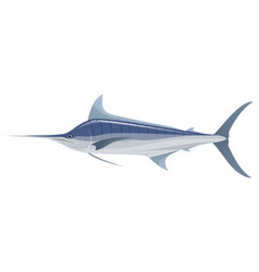 big blue marlin vector image