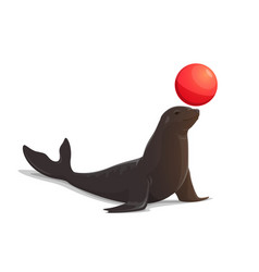 circus seal balancing red ball isolated vector image