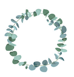 eucalyptus tropical plant in form circle on vector image