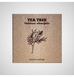 Herbs and Spices Collection - Tea tree vector