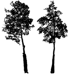 Tree Silhouette Ink Graphic vector image