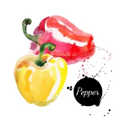Red and yellow peppers Hand drawn watercolor vector image vector image