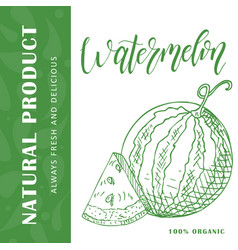 Fruit element of watermelon hand drawn vector