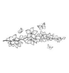 cherry flower blossom botanical art spring vector image