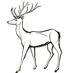 Deer wildlife animal christmas forest horned vector