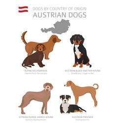 Dogs country origin austrain dog breeds vector