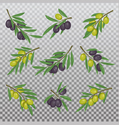 foliage with dark and light olive branches vector image