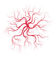 human blood veins vector image