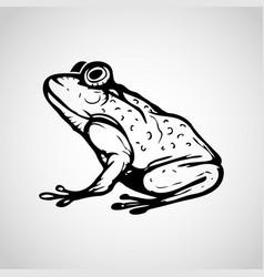 image frog on white background vector image