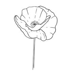 poppy on a white background design for logo vector image