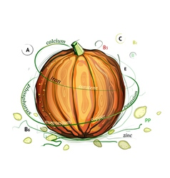 Pumpkin and seeds vitamins vector