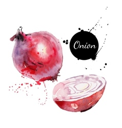 Red onion Hand drawn watercolor painting on white vector image