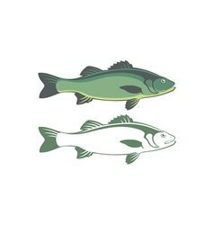seabass vector image