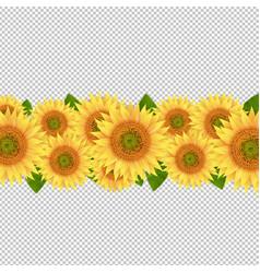 Sunflower border isolated transparent background vector