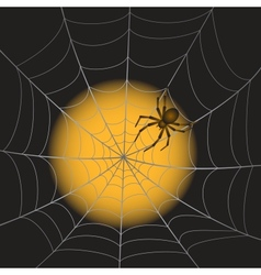 A Spiderweb with Spider vector image vector image