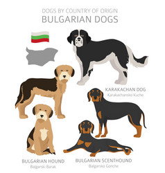 Dogs country origin bulgarian dog breeds vector
