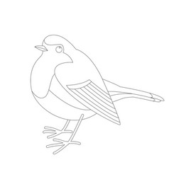 Robin bird lining vector