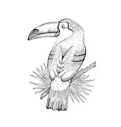 toco toucan bird tropical american wild animal vector image