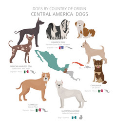 Dogs country origin central american vector