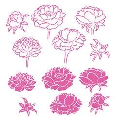 flower peony vector image