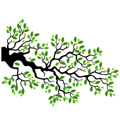 Green leaf tree branch vector image
