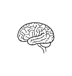 Human brain hand drawn outline doodle icon vector