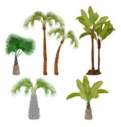 palm trees beach california plants brazil hawaii vector image