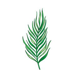 palm tropical leaf hand drawn sketch exotic vector image