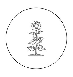 sunflower icon outline single plant icon from the vector image