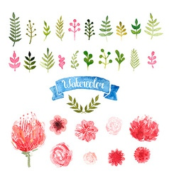 Watercolor flowers laurels and leaves vector image