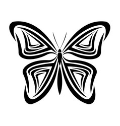 butterfly tribal tatto animal creativity design vector image