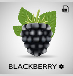 Blackberry sweet fruit forest berry isolated on vector
