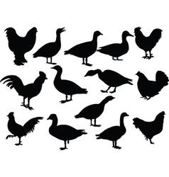farm birds - vector image