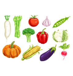 Fresh vegetable watercolor drawing set vector