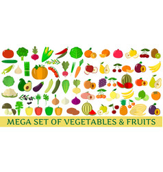 mega set of fresh vegetables and fruits vector image