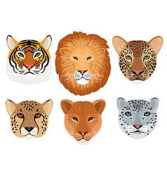 wild cat head set vector image
