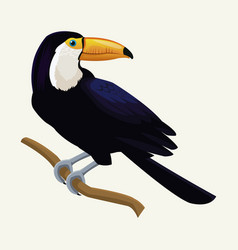 toucan exotic tropical bird vector image vector image