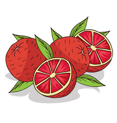 Isolate ripe grapefruit fruit vector