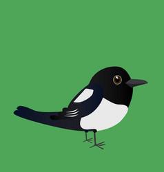 cute magpie vector image