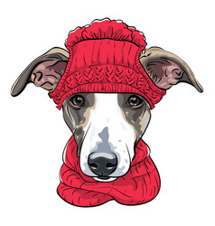 Italian greyhound dog breed vector