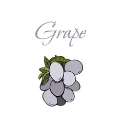 tasty veggies grapes vector image