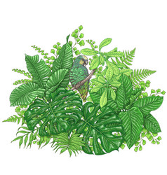 Tropical plants and sitting parrot vector