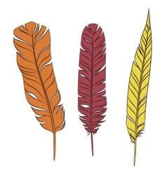 Set colorful feathers on a white background vector image