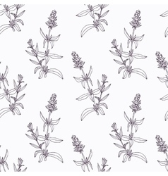 Hand drawn hyssop branch outline seamless pattern vector image