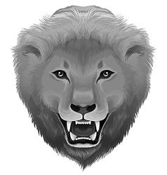 A grey lion vector