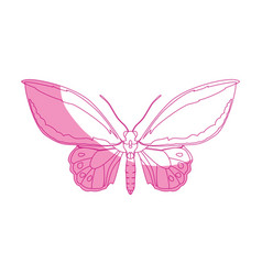 Beautiful butterfly silhouette vector