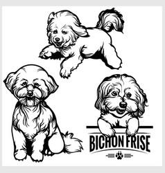 Bichon frise dog - set isolated vector
